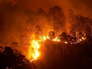 6 روز آتش سوزی در جنگل های گچساران بدون اطفاء !