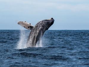 فیلم پرش نهنگ در ساحل بوشهر واقعیست ؟