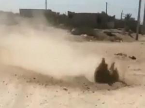 جوشیدن خاک در بوشهر