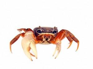 تعبیر خواب خرچنگ : 28 نشانه و تعبیر دیدن خرچنگ در خواب