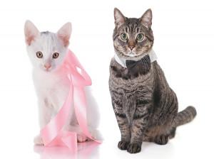 تفاوت ظاهری گربه نر و ماده