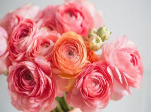 گل آلاله نماد چیست ؟