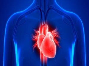 2 انشا با موضوع جانشین سازی قلب برای پایه دهم