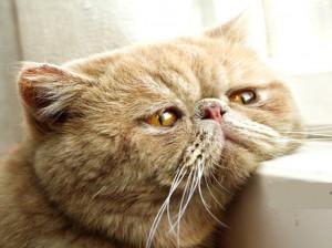 6 دلیل اصلی قهر کردن گربه خانگی و راهکارهای آن