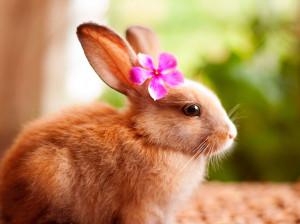 102 اسم بامزه ایرانی و خارجی برای خرگوش ماده (دختر)