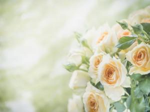 85 عکس گل رز با رنگ های زیبا و خاص