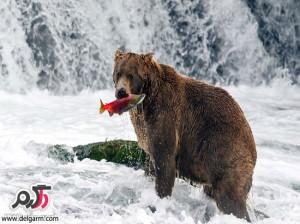 عکس های زیبا از طبیعت و حیات وحش آلاسکا