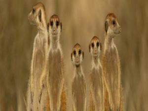 عکس های جذاب نشنال جغرافی از حیوانات(سری اول)