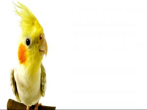 روش های نگهداری از پرندگان،چطور پرنده را آرام کنیم؟