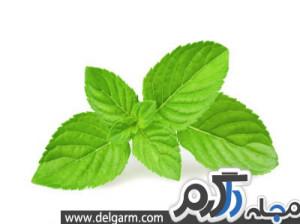 سبزی های و کاهش چربی خون