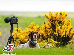 تصاویر دیدنی از طبیعت زیبای جزیره مول در اسکاتلند
