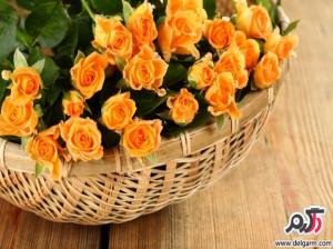 تصاویری زیبا از گل های زیبا سری 17