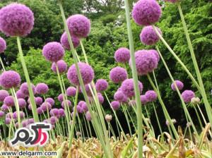 خواص و فواید گیاه والک از نظر طب سنتی