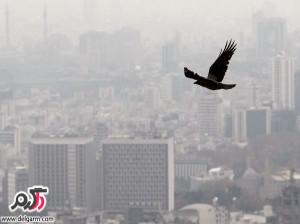 در آلودگی هوا چه باید کرد؟به همراه تغذیه مناسب در هنگام آلودگی هوا