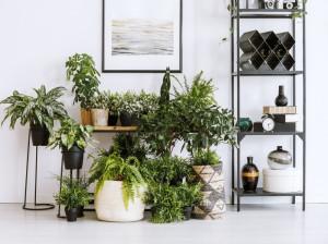 کاربرد گیاه آپارتمانی چیست ؟