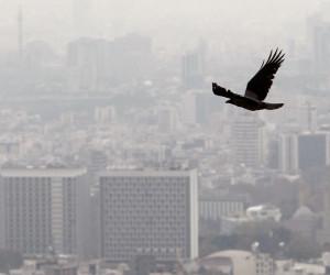 در زمان آلودگی هوا چیکار کنیم؟