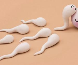 ۲۲ راهکار خانگی قدرتمند برای تقویت اسپرم (آقایان حتما بخوانند)