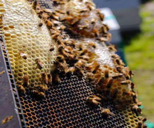 طعم و مزه عسل طبیعی چگونه است ؟