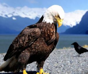 شعر زیبای عقاب و زاغ از دکتر پرویز خانلری