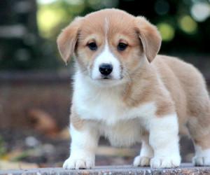 استارتاپی نو در حوزه فروش سگ