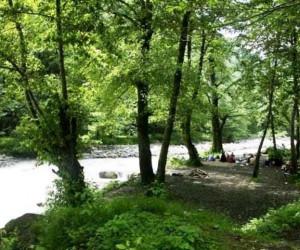 گردش قدم به قدم در جنگل های دو هزار و سه هزار تنکابن
