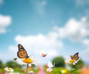 60 متن و جملات زیبای بزرگان درباره بهار