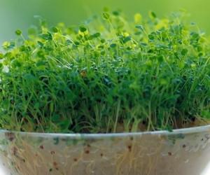 نحوه کاشت سبزه یونجه کاملا متفاوت و شیک