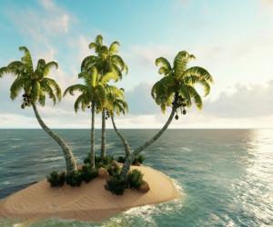 تعبیر خواب درخت نخل : 16 نشانه و تعبیر دیدن درخت نخل در خواب