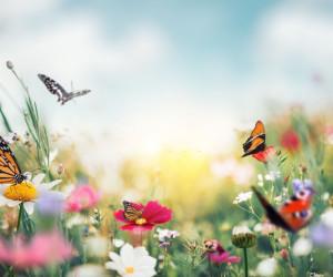 تعبیر خواب گل: 70 ترجمه و تعبیر دیدن خواب گل (مصنوعی و طبیعی)