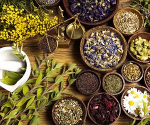 ۱۰ گیاه دارویی برای تقویت سیستم ایمنی بدن