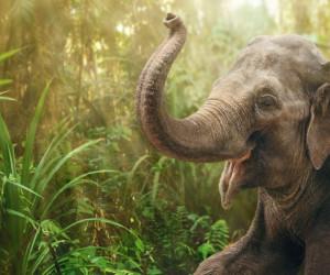 فیل در خواب چه تعبیری دارد ؟