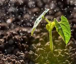 10 انشا با موضوع بوی خاک پس از بارش باران مناسب برای تمامی پایه ها