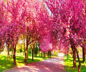 ۳۰ کد آهنگ پیشواز ایرانسل برتر به مناسبت فرا رسیدن فصل بهار