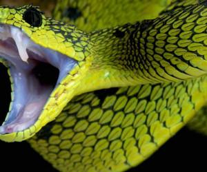 رازهای شگفت انگیز درمورد دندان های مار