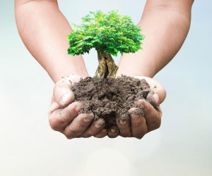 20 شعر زیبا درمورد روز درختکاری