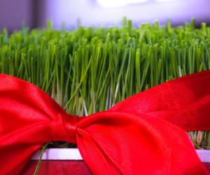 چگونه سبزه عید درست کنیم ؟