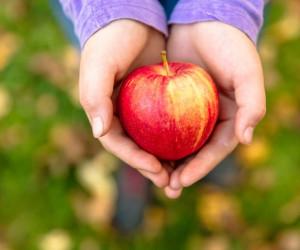50 عکس خاص و هنری از سیب های خوشمزه و خوشرنگ