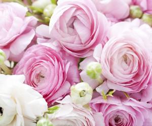 55 عکس زیبا از گل آلاله که چشم هایتان را خیره می کند