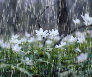ورود سامانه جوی جدید و شروع بارشها از امروز