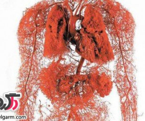 مواد غذایی خون ساز کدامند؟