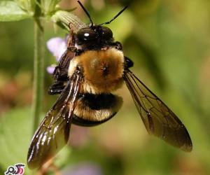 علت و درمان بیماری های زنبور عسل