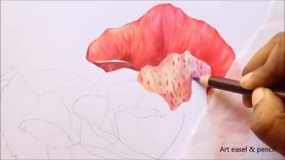 طراحی و رنگ آمیزی گل رز قرمز