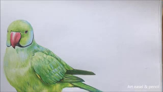 طراحی و نقاشی طوطی با مداد رنگی