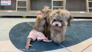 کلیپ بازی کردن سگ و میمون با هم
