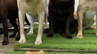 کلیپ جشن تولد سگ با حضور دوسنتانش