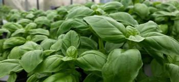آشنایی با طرح توجیهی پرورش گیاهان دارویی