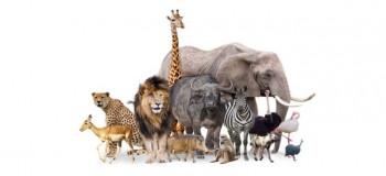 خطرناک ترین حیوانات جهان: معرفی ۱۵ تا از خطرناک ترین حیوانات دنیا