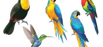 پرنده در خواب: تعبیر دیدن خواب پرنده چیست ؟