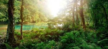 جنگل در خواب: تعبیر دیدن خواب جنگل چیست ؟