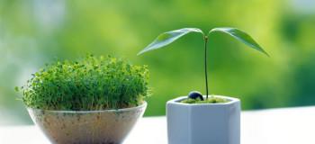 آموزش کاشت سبزه فوری قبل از فرا رسیدن عید نوروز